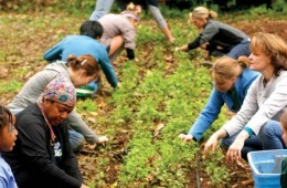 Volunteers from Crop Mob Atlanta weed a row of beets at Truly Living Well Natural Urban Farms in East Point, Ga.