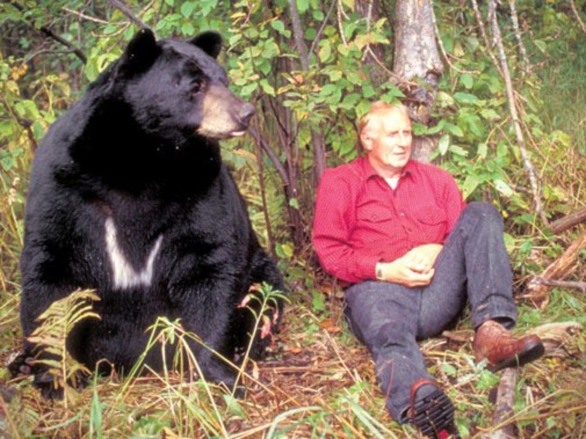 The Bear Truth