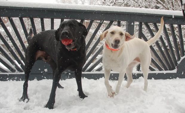 Christmas 2009 Gracie and Atticus