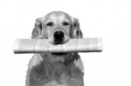 dog and newspaper