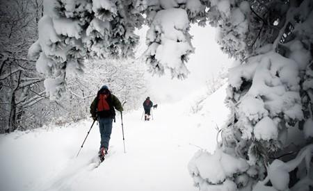 Backcountry road skiers explore Roan Mountain, Tenn. Photo: Kristian Jackson