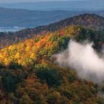 fall-foliage