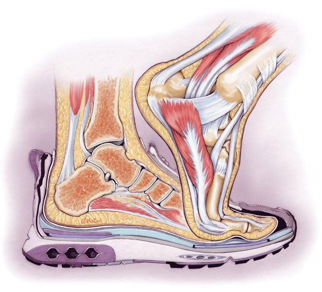 Illustration showing shoe safely enclosed in a shoe superimposed with a foot breaking free of the shoe.