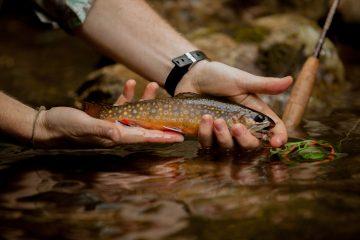 Fly Fishing  Rapidan River, Shenandoah National ParkHCV Next