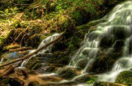 Buffalo Mountain Tennessee