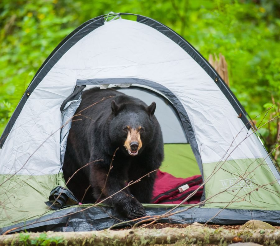 & Camping Safety: How to Avoid Wild Animal Encounters
