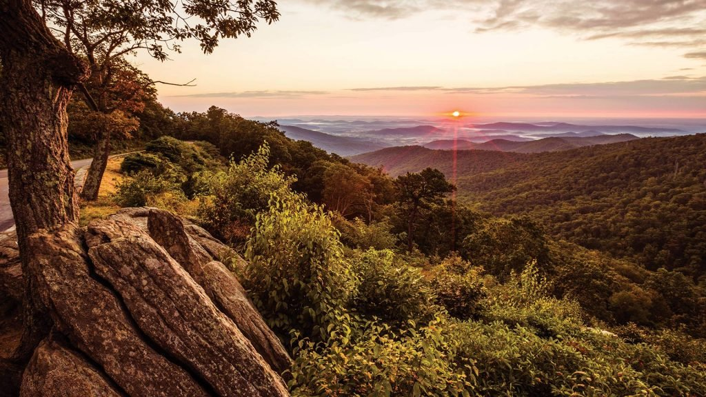 A Murder In The Woods: The Mystery Behind Shenandoah