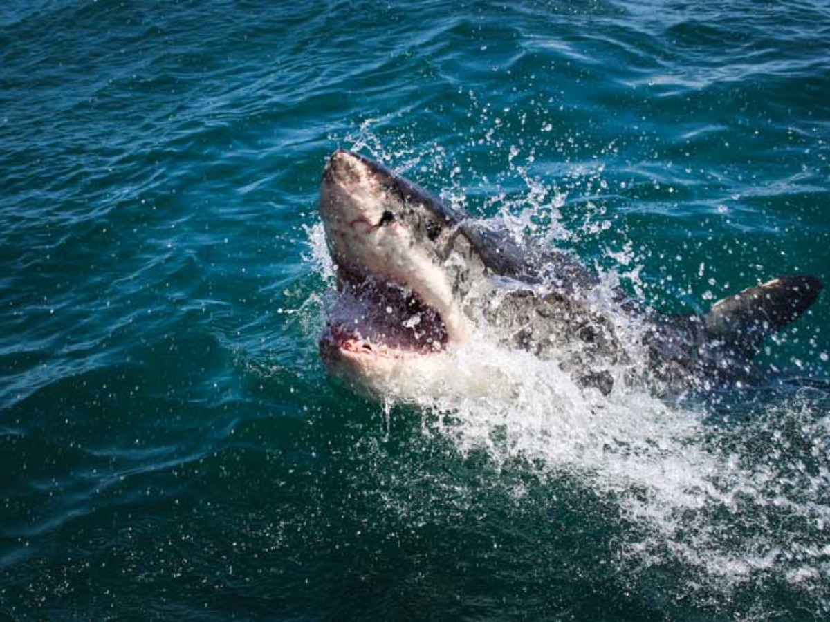 Girl Survives Shark Attack At North Carolina State Park Beach